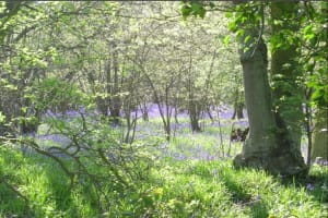 Linslade Wood