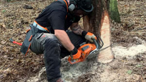 Felling and processing trees, chainsaw maintenance training