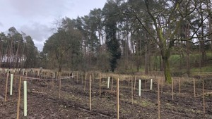 Tree Planting near Rushmere Main Entrance
