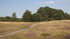 Heathland re-creation at Rushmere