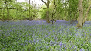 20th anniversary appeal launched to preserve King's Wood