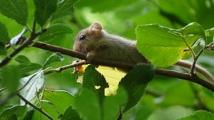 Dormouse Project